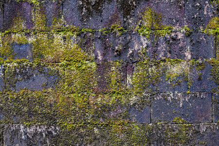 parasite: fern on old brick wall , parasite plant on brick wall.