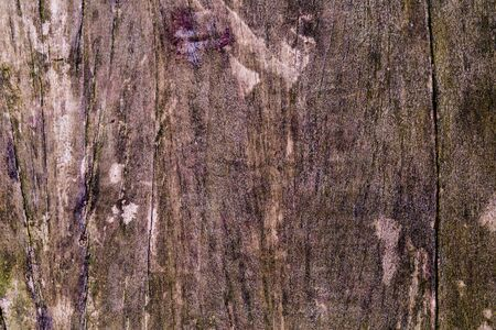wood surface: Surface of timber background,wood background. Stock Photo