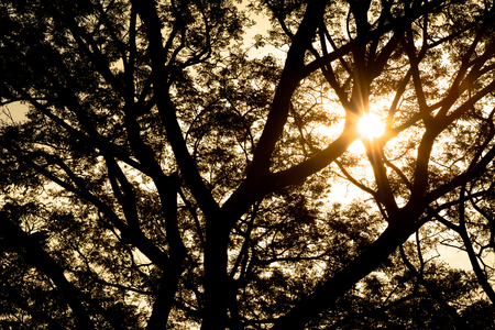 against the sun: Tree branch silhouette against sun lights. Stock Photo