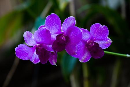 dedo me�ique: Belleza p�rpura veteado en flor flor de la orqu�dea. Foto de archivo