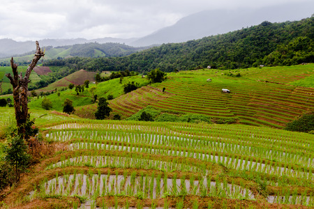 land management: Rice fields on terraced of Pa Pong Pieng, Mae Chaem, Chiang Mai, Thailand - Vibrant color effect Stock Photo