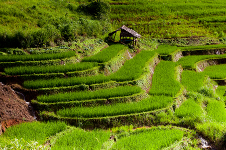 Rice fields on terraced of Pa Pong Pieng, Mae Chaem, Chiang Mai, Thailand - Vibrant color effect Stock Photo