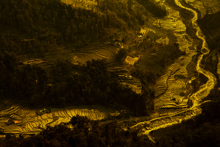 rice fields on terraced in north India, Sikkim.