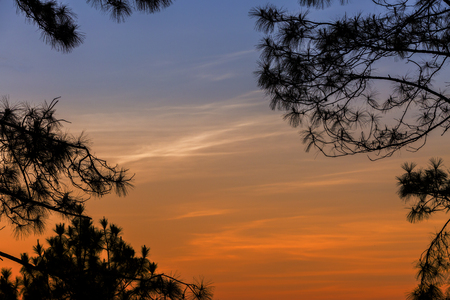 Silhouetted tree on twilight sky after sunset