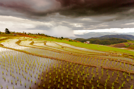 Rice fields on terraced of Pa Pong Pieng, Mae Chaem, Chiang Mai, Thailand Stock Photo