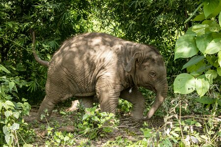 animal, asia, asian, background, beautiful, beauty, big, conservation, elephant, environment, foliage, forest, garden, grass, green, japan, jungle, landscape, large, leaf, mammal, moss, national, natural, nature, outdoor, park, plant, river, rock, safari, stone, strong, summer, thai, thailand, tourism, travel, tree, trees, tropical, trunk, water, wild, wilderness, wildlife Standard-Bild - 131918247