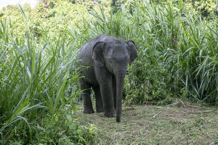 animal, asia, asian, background, beautiful, beauty, big, conservation, elephant, environment, foliage, forest, garden, grass, green, japan, jungle, landscape, large, leaf, mammal, moss, national, natural, nature, outdoor, park, plant, river, rock, safari, stone, strong, summer, thai, thailand, tourism, travel, tree, trees, tropical, trunk, water, wild, wilderness, wildlife Standard-Bild - 131918404