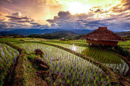 Rice fields on terraced of Pa bong Pieng, Mae Chaem, Chiang Mai, Thailand