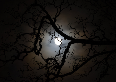Tree branch silhouette moonlit by a full moon Reklamní fotografie