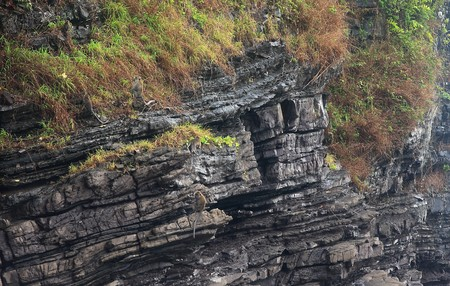 blocky: limestone bedding plains showing level blocky strata on a coastal cliff face