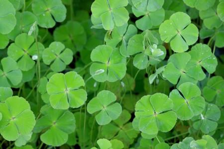 Fern leaf shapes, strange and beautiful patterns