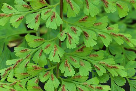 disperse: Fern leaf shapes, strange and beautiful patterns