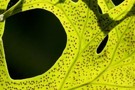esporas: Hoja de helecho con esporas muchos efectos de luz  Foto de archivo