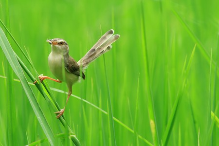 Insects, birds are out feeding the baby comes Stock Photo