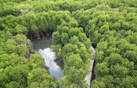 Mangroves from high angle Stock Photo - 6989949