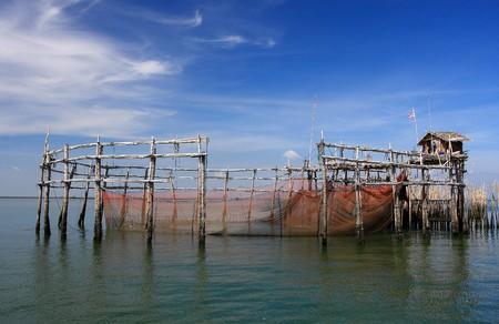 lampekap: Lampshade mackerel Central Gulf of Thailand