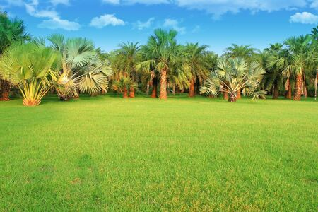 palm trees in tropical garden photo