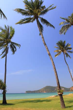 Palm tree on beach background photo