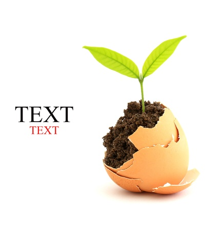 symbols  metaphors: growing green plant in egg shell on white background