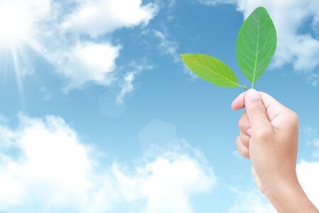 fourleaved: fresh green leaf in hand against the sky