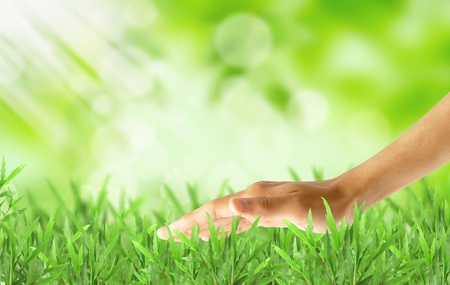 lawn area: Hand over green lush grass Stock Photo