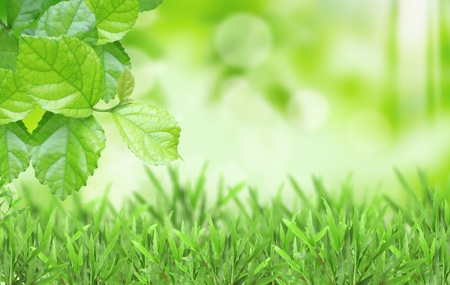 Natural green blurred background Stock Photo - 9440334