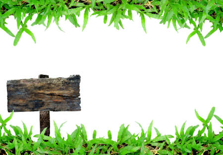 channelize: grass frame on white background