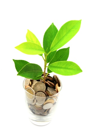 saving tips: thai coins and green plant growing in glass Stock Photo
