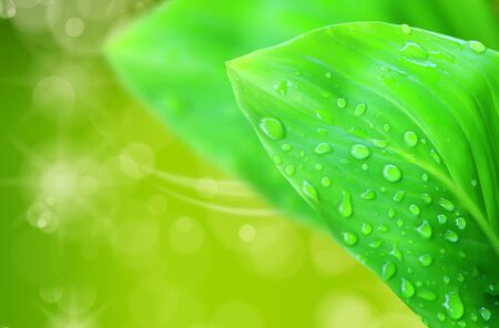 waterdrop: Natural green blurred background