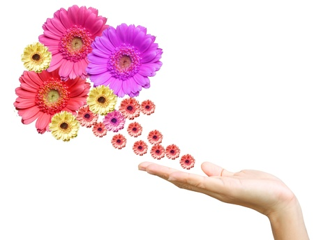 Woman's hand with flowers Stock Photo - 9904990