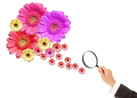 flower and magnifying glass on a white background.