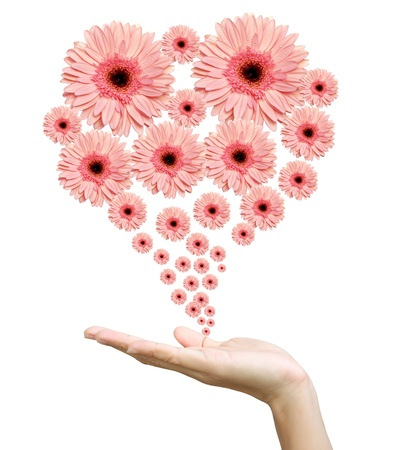 Woman's hand with flowers Stock Photo - 9904984