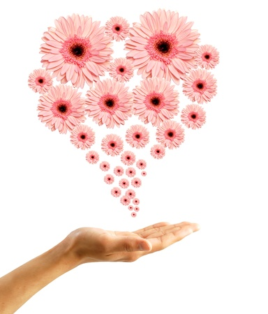 Woman's hand with flowers Stock Photo - 9904986