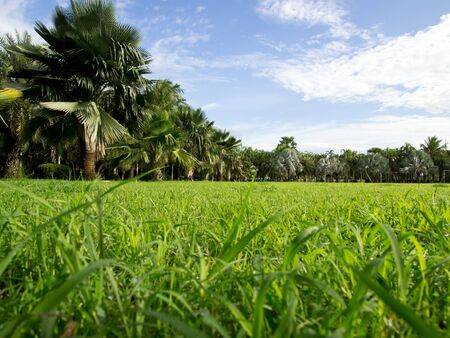grass plot: palm trees in tropical garden Stock Photo