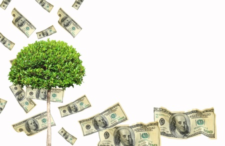 Money tree. Isolated over white Stock Photo - 10609737