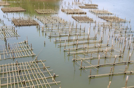 commercial fisheries: Coop in the coastal areas in Chanthaburi, Thailand.