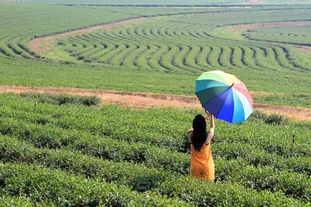 Beautiful woman holding multicolored umbrella at Green Tea Farm photo