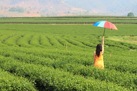 Green Tea Farm photo