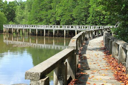 Concrete bridge go to mangrove forest photo