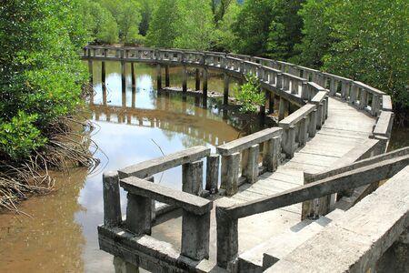 Concrete bridge go to mangrove forest photo