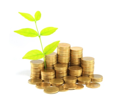 Gold coins and plant. On a white background photo