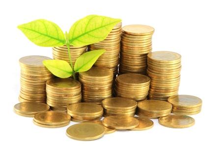 desarrollo econ�mico: Las monedas de oro y de la planta. Sobre un fondo blanco