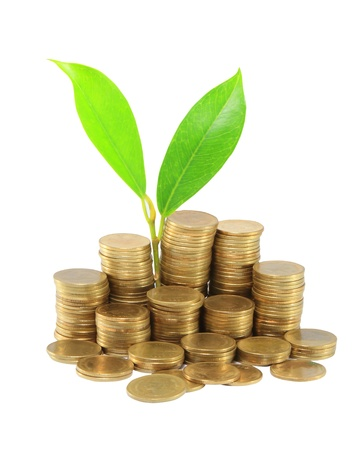 Gold coins and plant. On a white background Stock Photo - 14208392