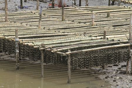 Shellfish farm, Thailand photo