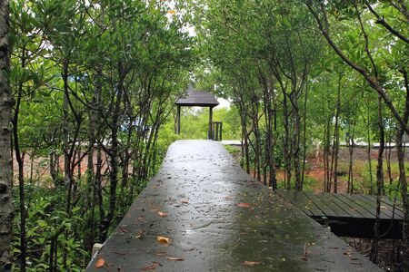 Wood path way among the Mangrove forest, Thailand Stock Photo - 14382312