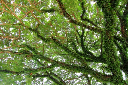 Under big green tree. Nature composition photo