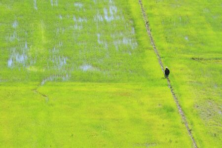 rice field at northern of Thailand photo