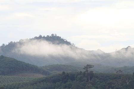 morning fog in dense tropical rainforest photo