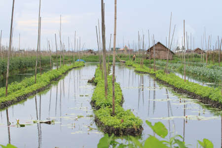 Floating gardens, Inle Lake photo