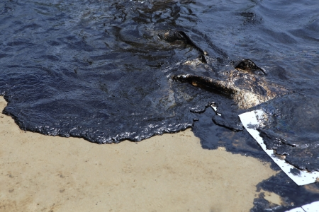 crude oil spill on the stone at the beach